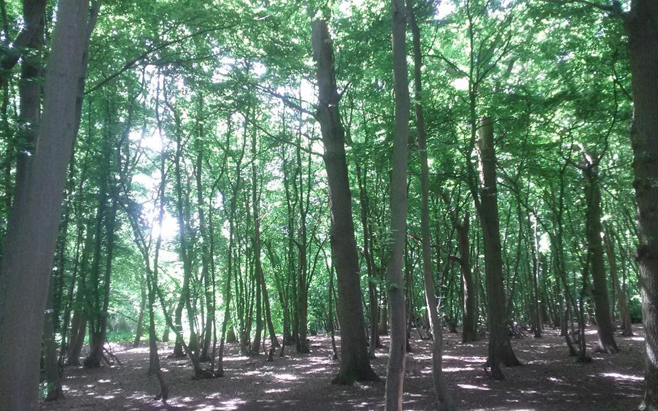 Woodland near the monastery